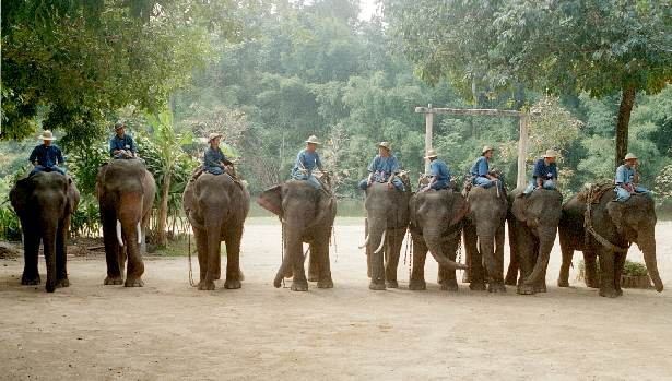 leben elefanten im dschungel
